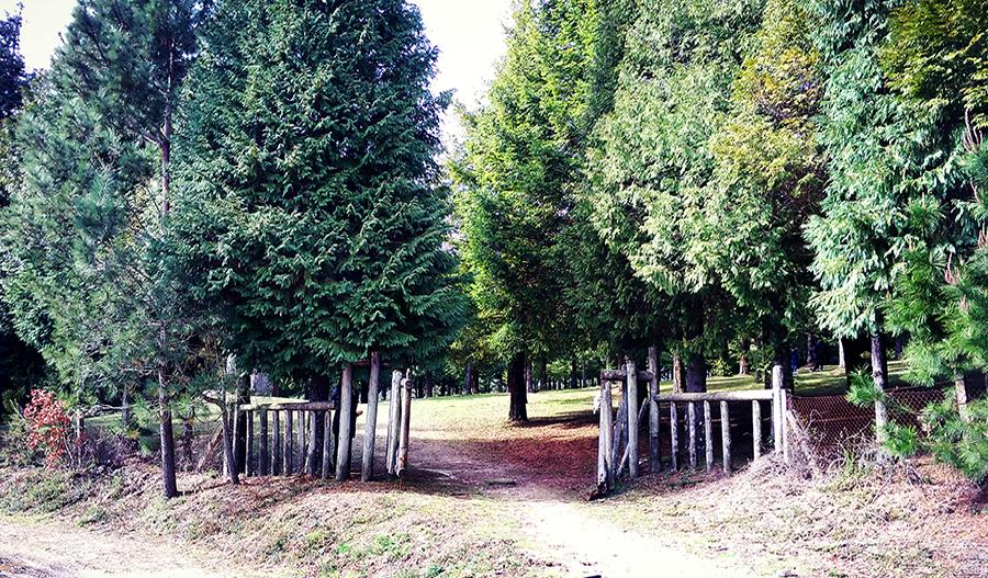 El mayor bosque de secuoyas de Europa